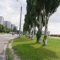 Деревья по улице 30-летия Победы