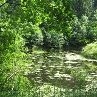 Сологубовка. Река Мга