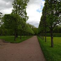 Регулярная часть парка