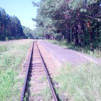 Яковлевский бор, детская Жд станция Лесная