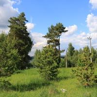 Природа в окресностях Макаровки