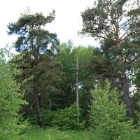 Природа, окресности Макаровки (здесь была турбаза)