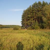вид с луга на лес