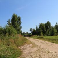 Северная Грива, дорога в урочище Подболотное
