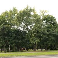 Бакинская улица, Аршиновский парк