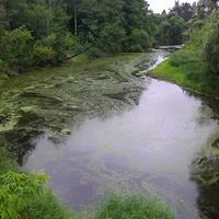 Река Поля с ж/д моста в селе Кривандино