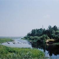 Вид с моста через р. Пра около деревни Евлево на оз. Святое Евлевское. Август 1994г.