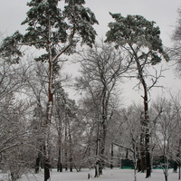 Парк. Первый снег