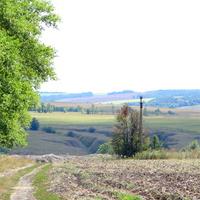 Дорога домой вдоль тополиной рощи поворот на хутор Выдрин.
