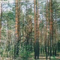 В долине реки Поля за Илкодино. 2004г.