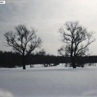 На месте бывшей деревни Мишунино. 1994г.