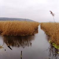 Річка Ірдинка.