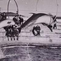 Батумский дельфинарий 1977 год.