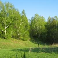 Ренев лес