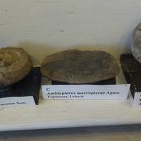 Палеонтолого-стратиграфический музей