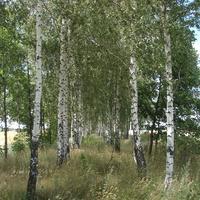 Горобівські пейзажі
