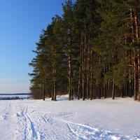 Лес на Осиновой горе.