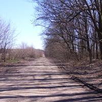 Дорога до Лісового(Петрівське)