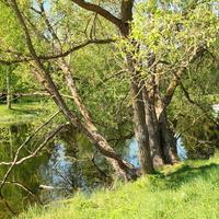 Берег Среднего Розовопавильонного пруда