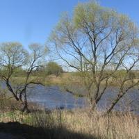 Ям-Ижора, река Ижора
