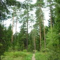 Кобелево. В лесу