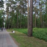 Сестрорецк (Курорт).