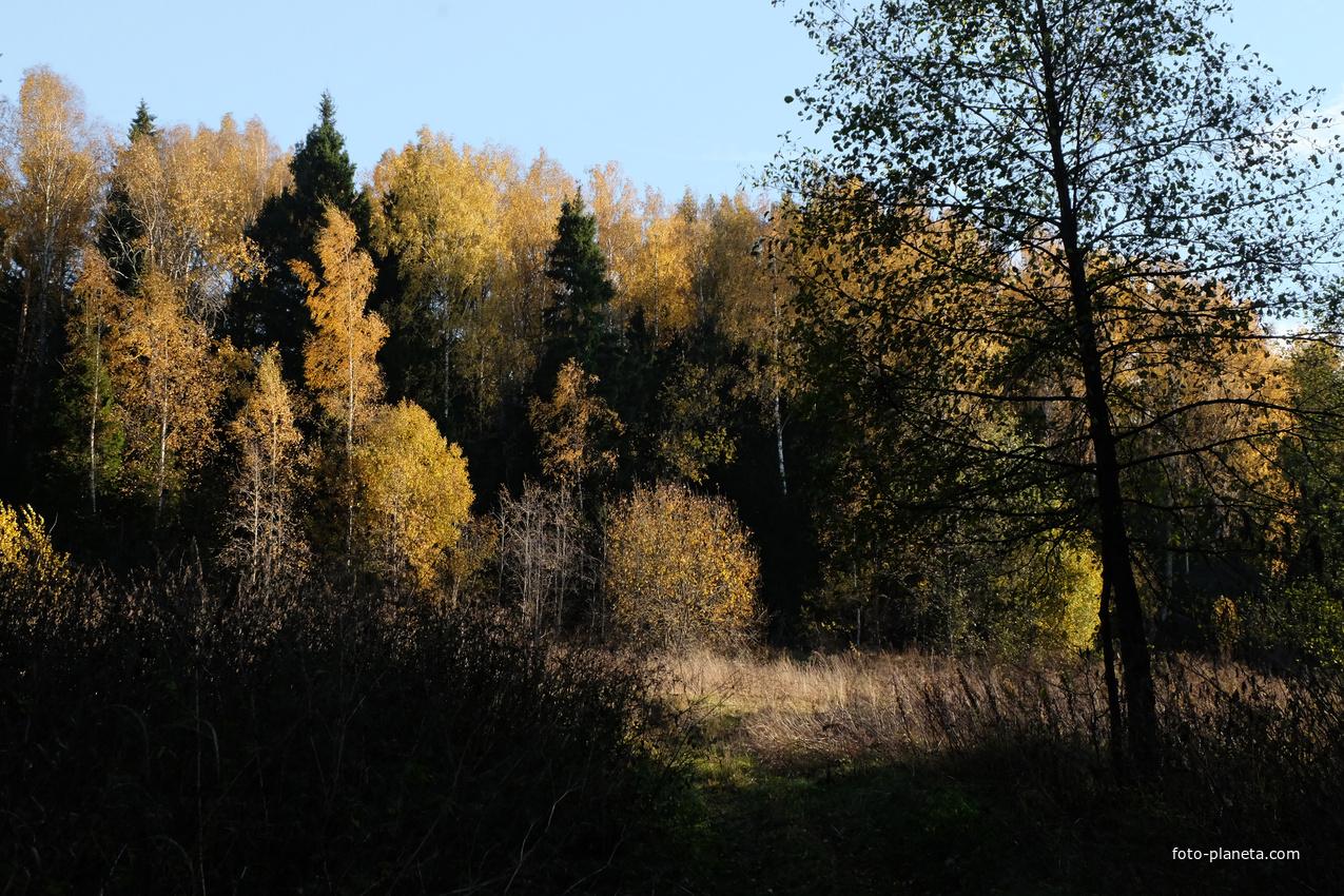 Лес за деревней