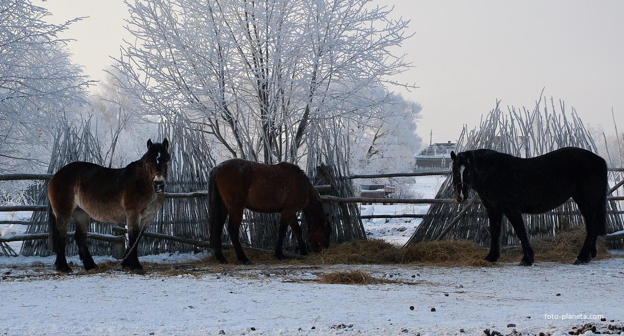 В тишине зимней стужи