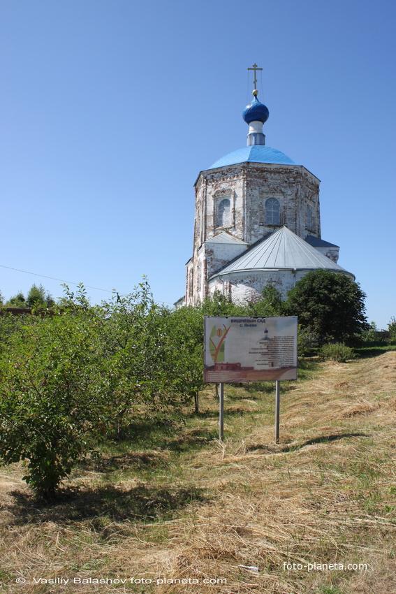 Вишневый сад, высаженный в память  об односельчанах,  погибших в ВОВ