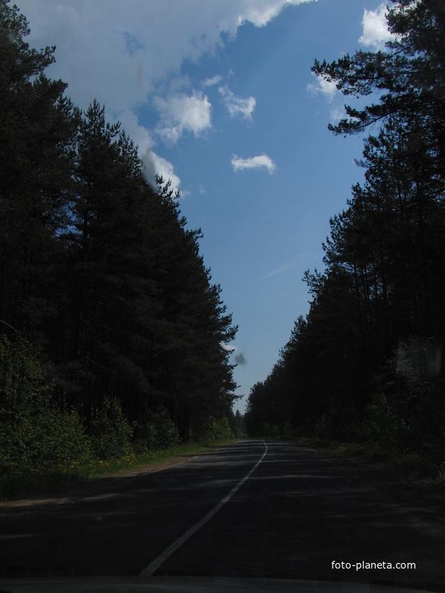 Лес посаженный школьниками в 1962г. по дороге в Кабище