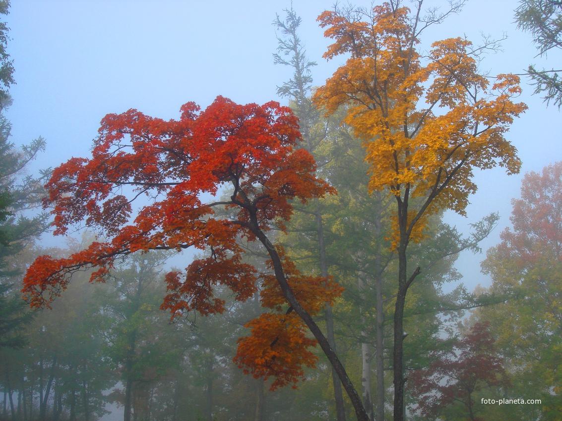 Амурск. Разноцветная осень