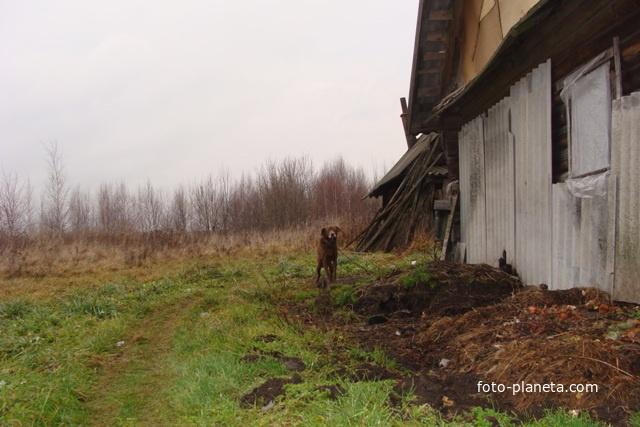 Деревня скакун касторенский район фото