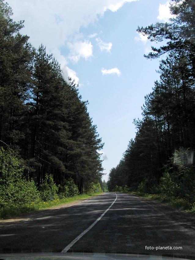 Такие леса посажены в 1958-1962 г.г. мальчишками и девчёнками по 8-10 тыс. саженцев.