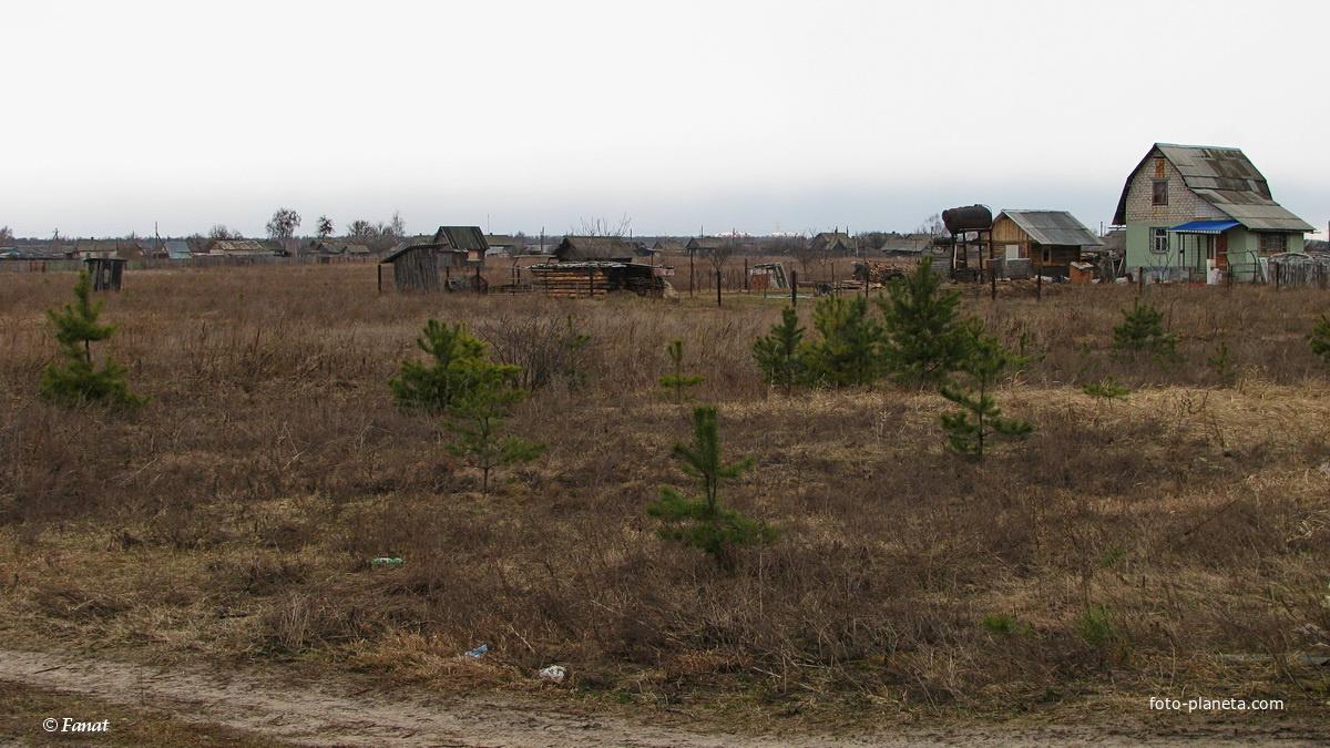 Фото дачные деревни