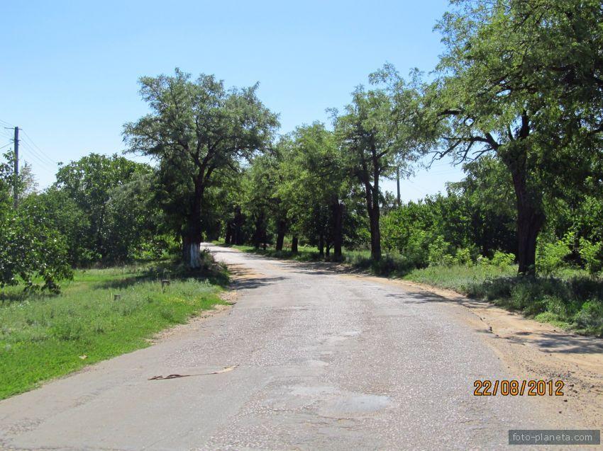 Деревья у дороги