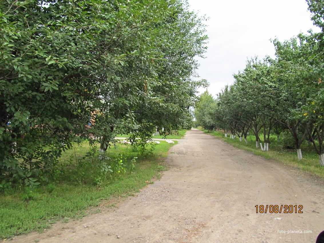 Улица в посёлке Первомайское