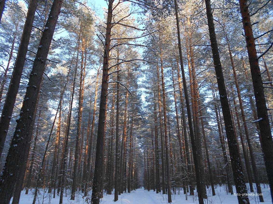 Дорога на питомник лесхоза
