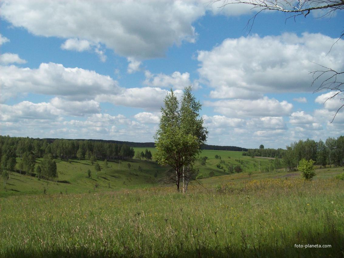 лес около богородского