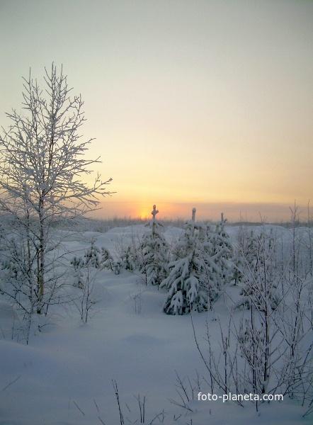 Западная Сибирь зимой. Морозный закат над болотом.