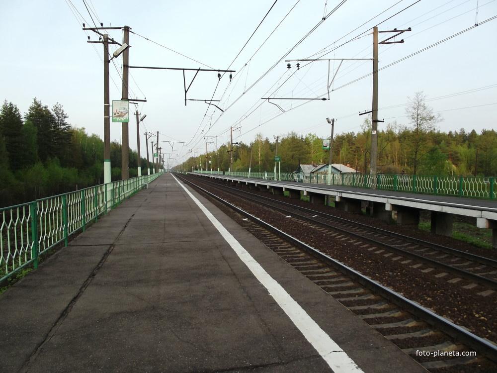 Платформа Заполицы. Кругом – лес
