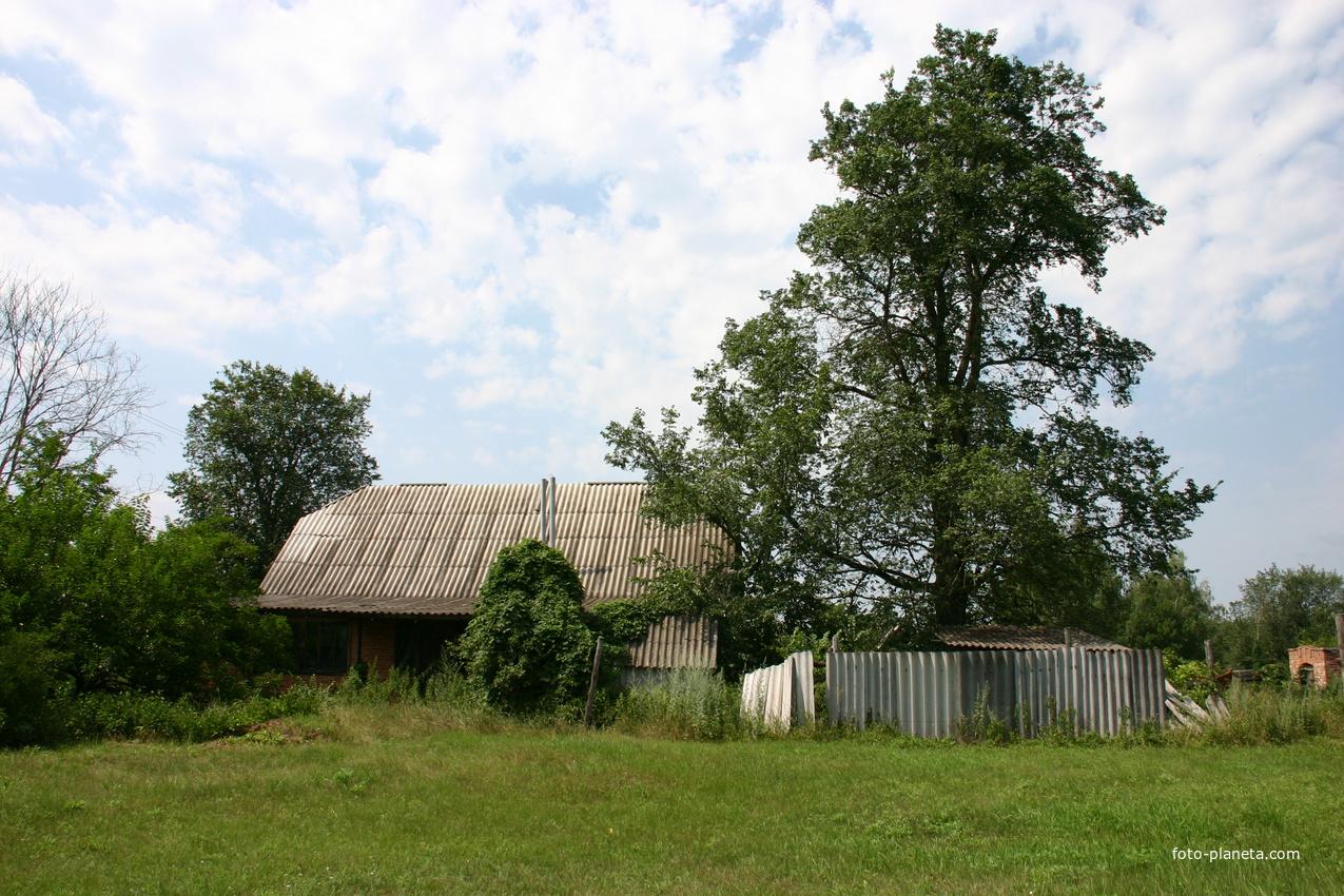 Дом и дерево