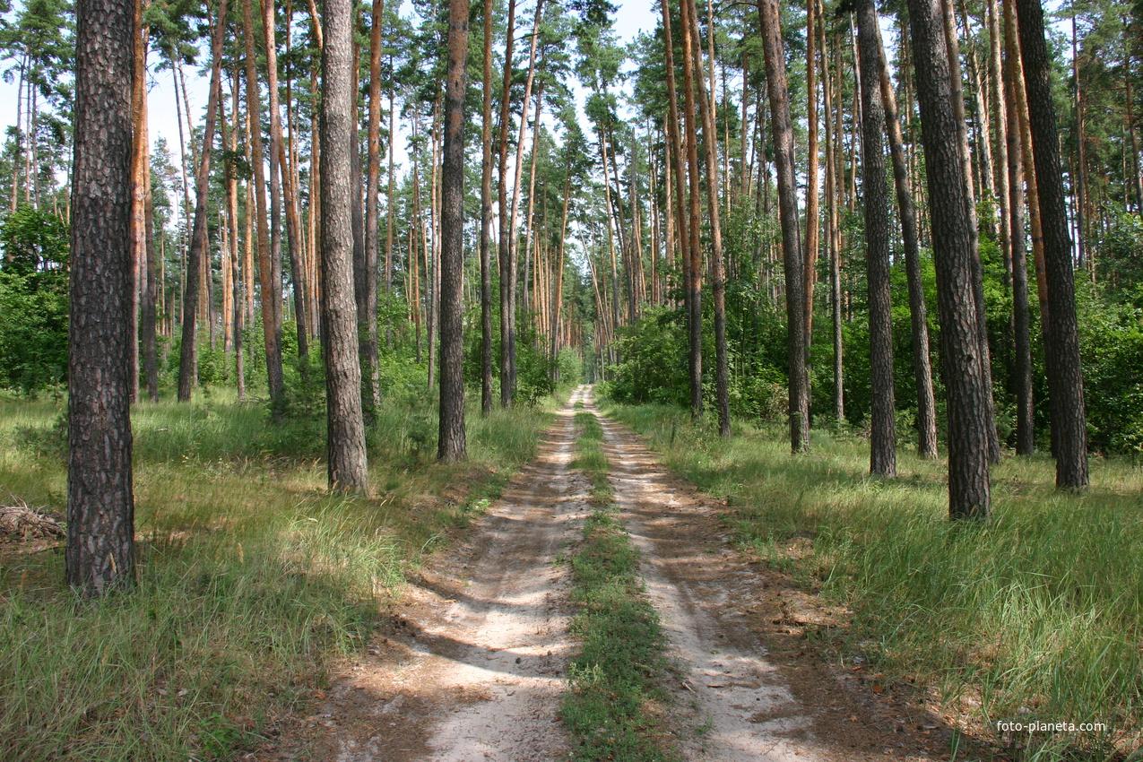 Дорога в Кулики