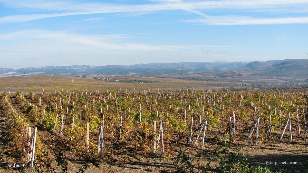 Виноградники по дороге в Балаклаву