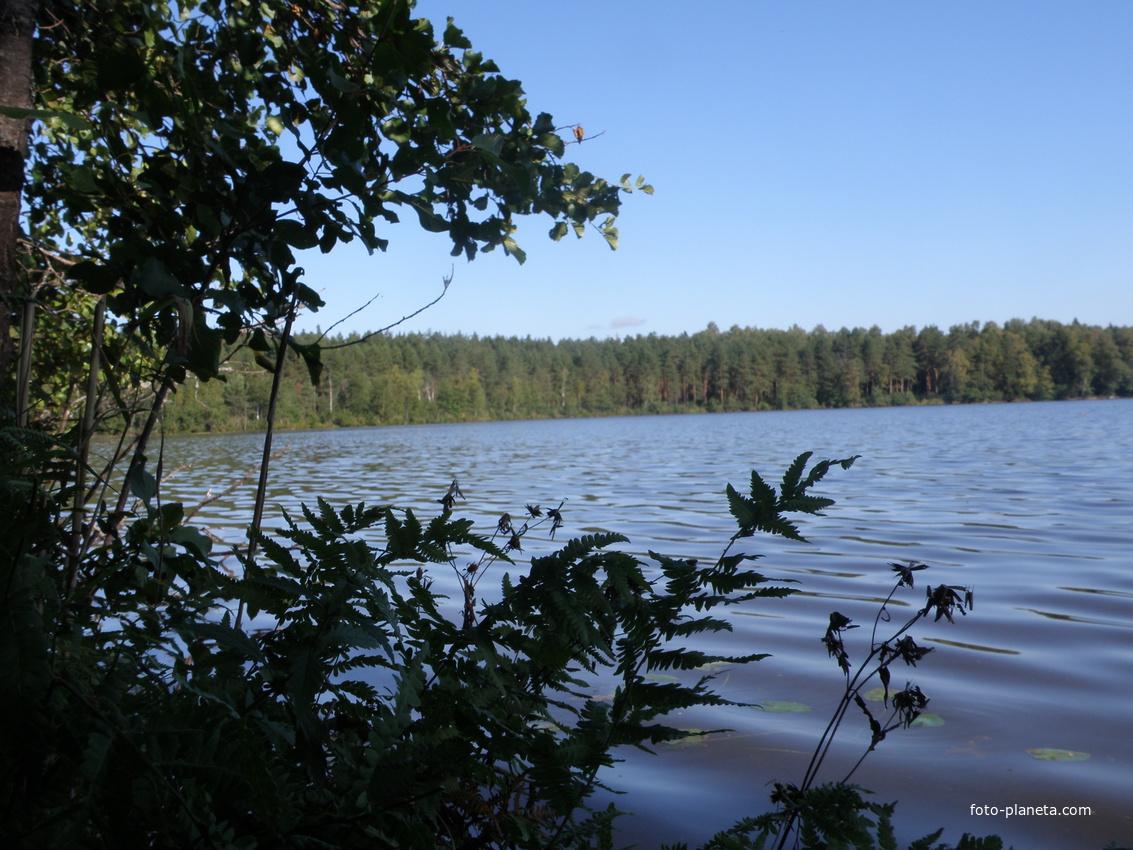 рыбалка озеро золотая вешка талдомский район