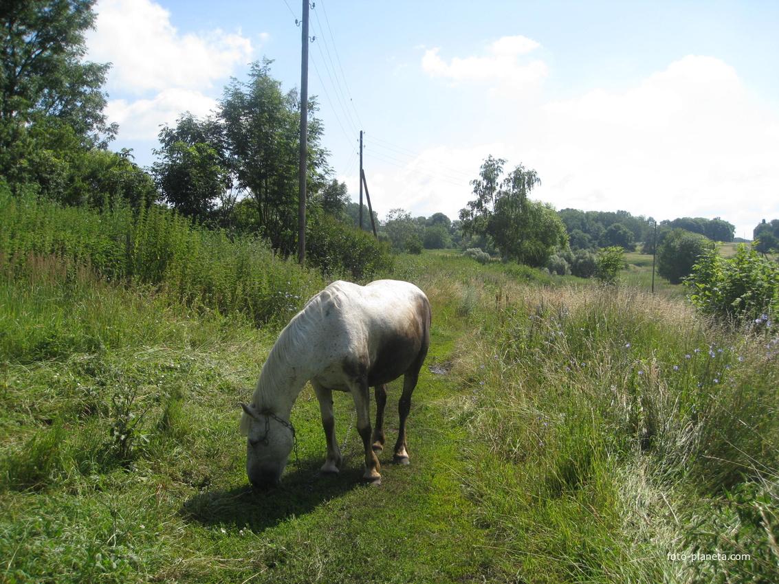 Лошадь в Казинке