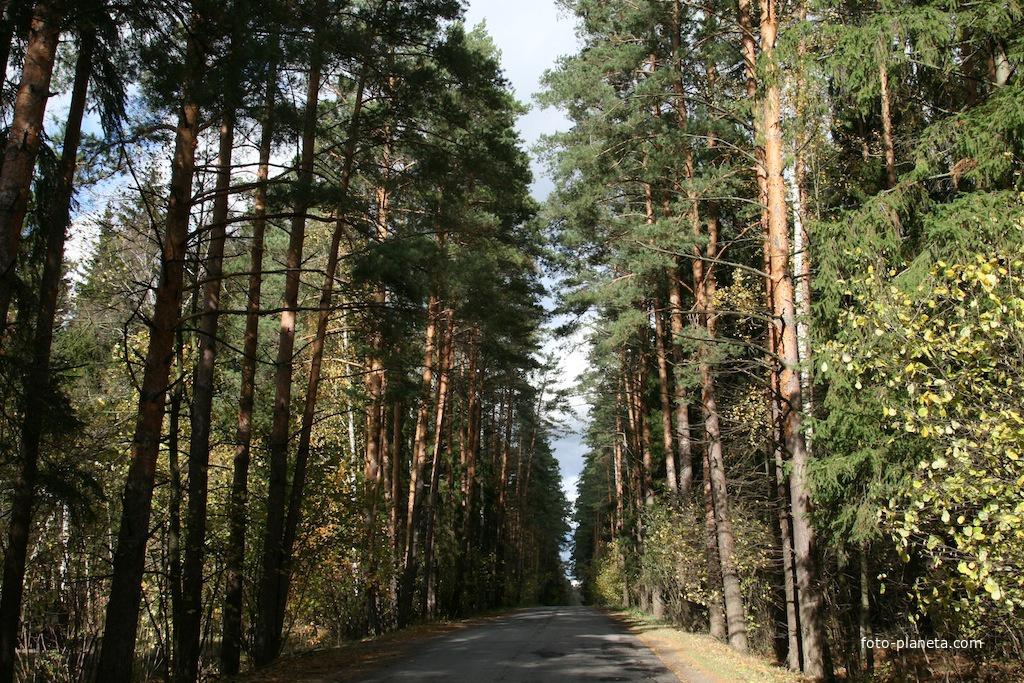 Дорога в Поливаново