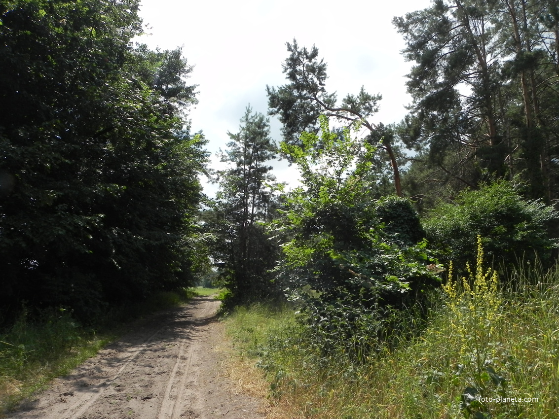 Дорога к пастбищу
