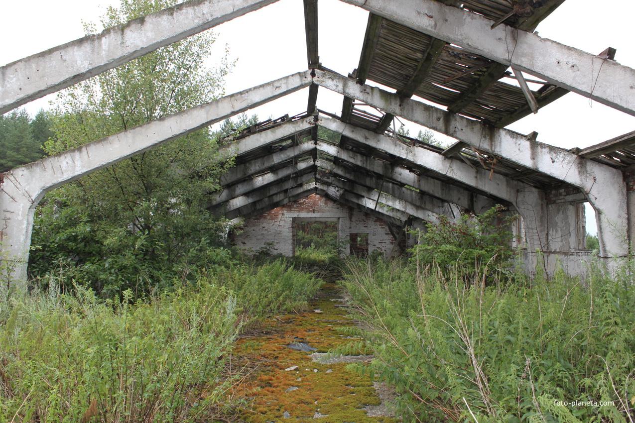 Старый коровник в Нарышкино. Раньше здесь помещались свыше 70 голов.