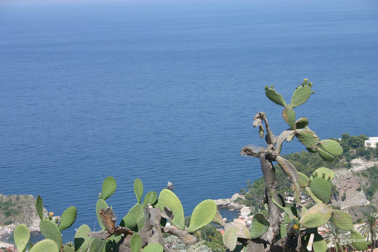 Кактусы у моря
