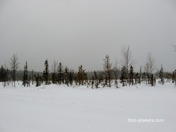 Хурумпауль. март 2010. Югра. Западная Сибирь.